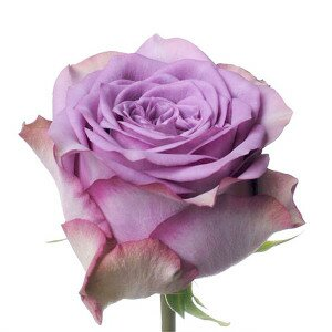 Цветов для вас магазин киев левый берег — pic 3