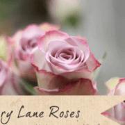roza-memori-laj